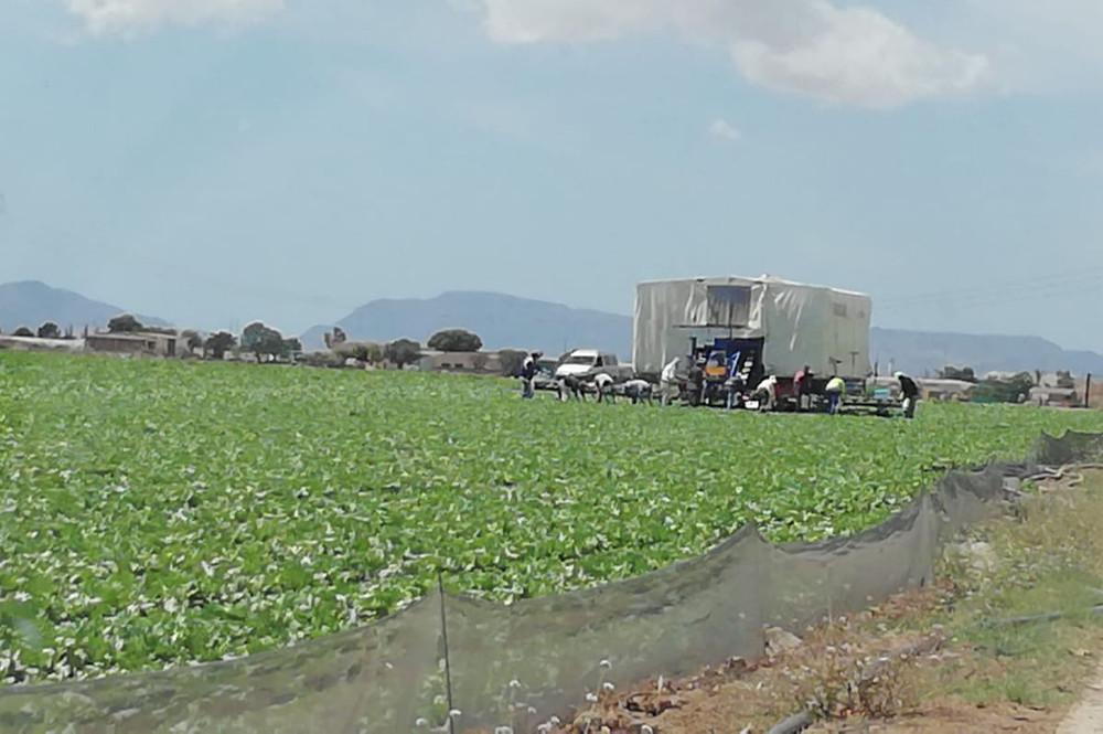 Temporeros recolectando en el campo de Cartagena